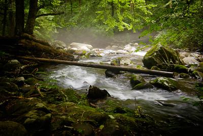 Porters Creek Trail - Log Bridge