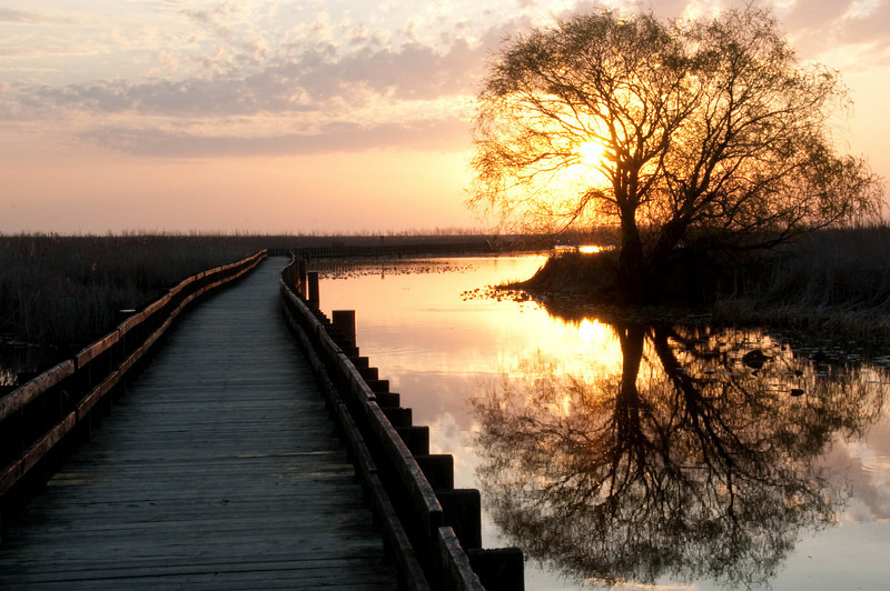 Sunrise on the Marsh at Point Pelee National Park