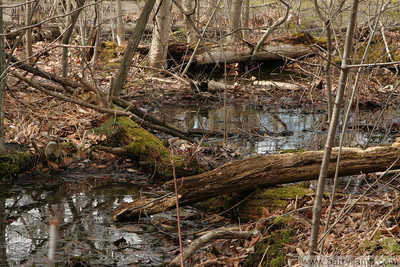 Another view of the tangled mess of fallen trees in the swamp.