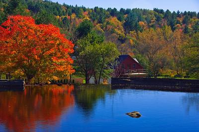 Reflections on a city pond