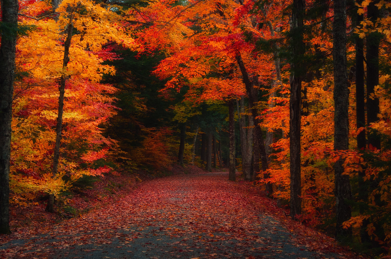 Walk with me down this path....who knows what's around the next bend