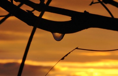 Sunkissed Raindrop After The Storm I by Catherine Aranda~Learned
