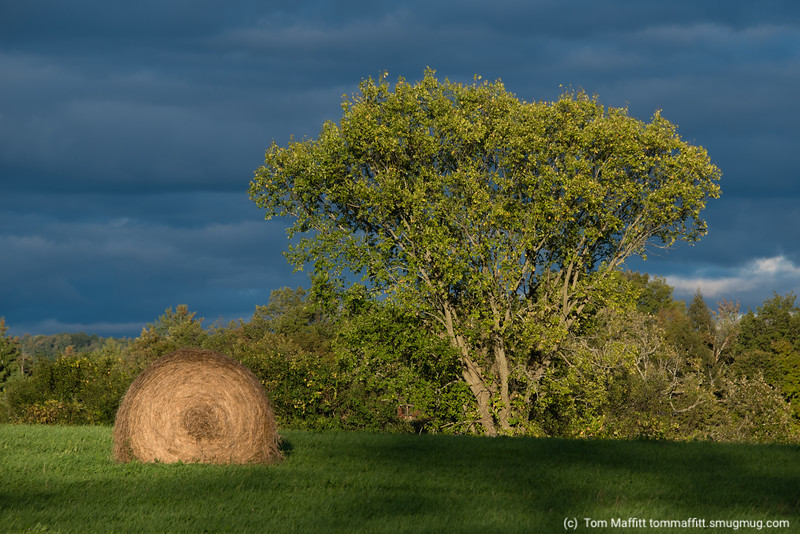 """Autumn Field Meets Winter Sky"""