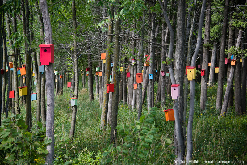 """Colorful Birdhouses"""