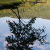 """""""Morning Reflections,"""" Lake Mansfield Trout Club, Stowe, Vemont"""