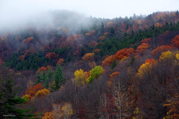 Vermont Palette