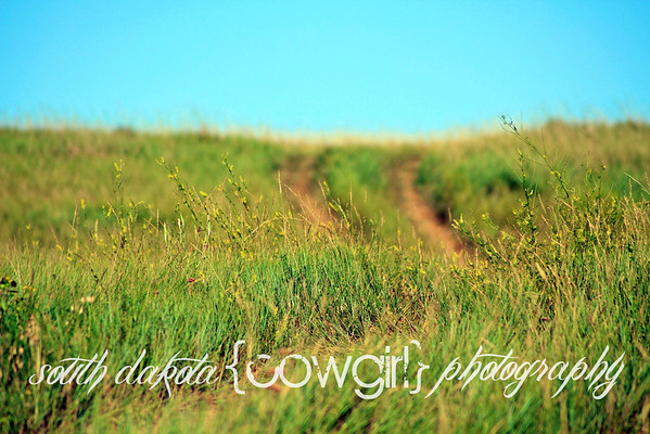 Sweet clover over a ranch road.