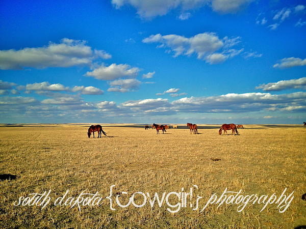 Horses and Alfala