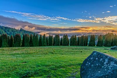 Sunrise Fog - RJ Hamer Forest Arboretum
