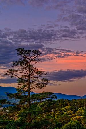 Maroondah Reservoir Tree