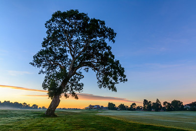 Sunrise Tree Arch over Clubhouse