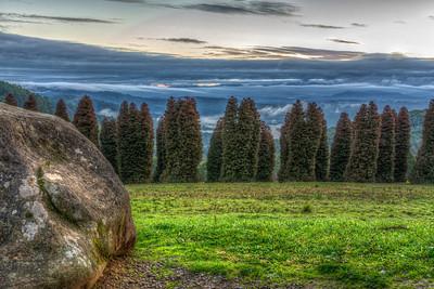 A Misty Rise - RJ Hamer Forest Arboretum