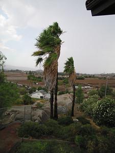Stormy palms, 2 Sep 2007