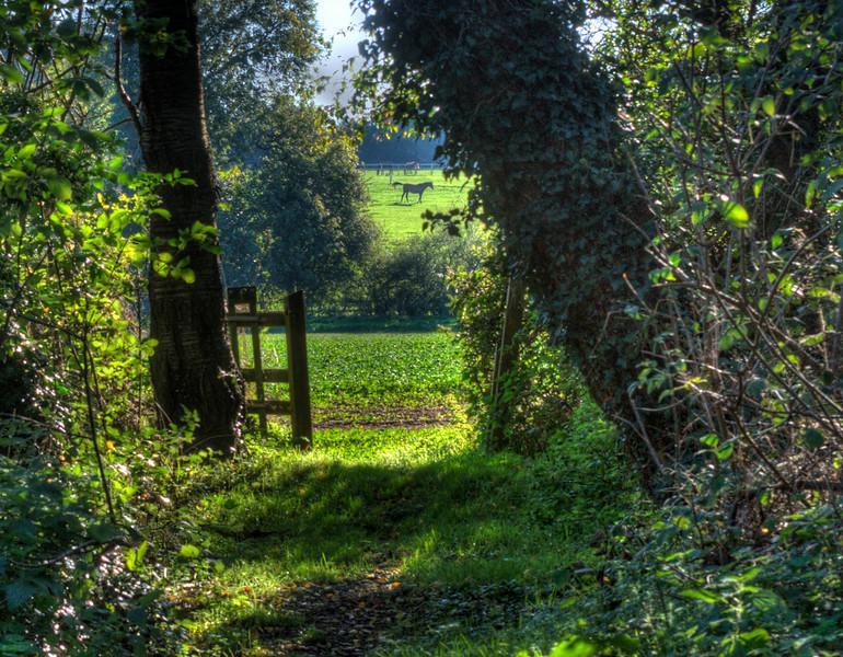 Puddephats Lane