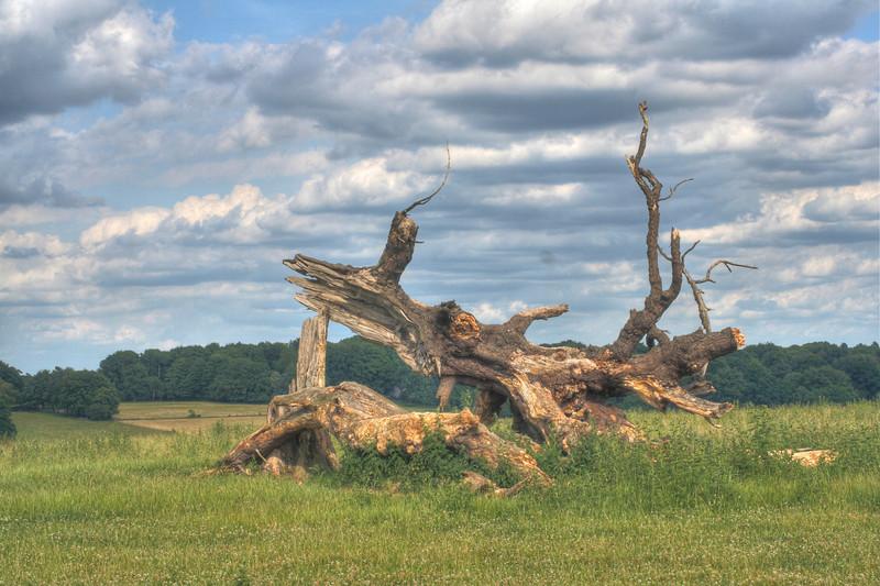 Dead Tree at Frithsden