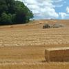 Harvest in Nettleden