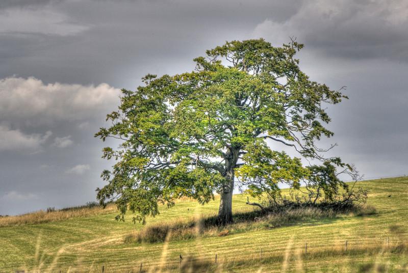 Tree near Berkhamsted Castle