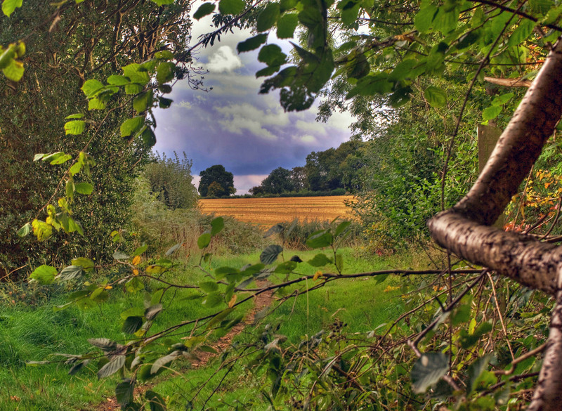 A field of stubble and a tree in the distance.  Hertfordshire in the early Autumn.