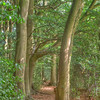 This footpath runs through the wood to the site of a Bronze Age Fort at Cholesbury, Hertfordshire..