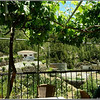 Under grapevines, the view overlooks a residence where goats live.