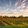 Vineyard and Clouds At Sunset