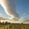 Vineyard and Lenticular Cloud