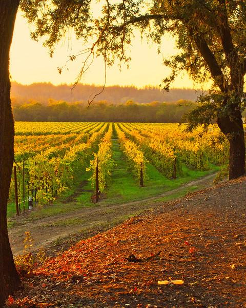 Vineyard Sunset Eastside Road