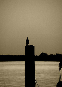 Bird on a Pole Sepia