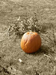 Pumpkin Sepia