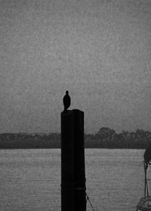 Bird on a Pole B&W