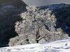 Bogafjellet <br /> <br /> Winterphoto
