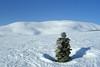Frå Kvamskogen mot Tveitakvitingen