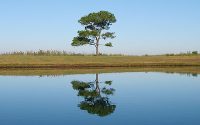 Lone Pine on the pond, Cherrystone Campground, Va.