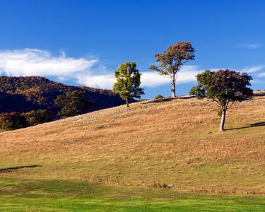 Three Trees on the Hill  Blue Grass, VA.