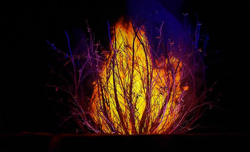 Non Burning Bush