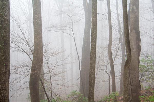 Winter Fog II