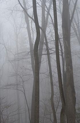 Winter Fog I