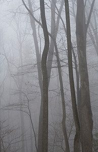 Winter Fog I