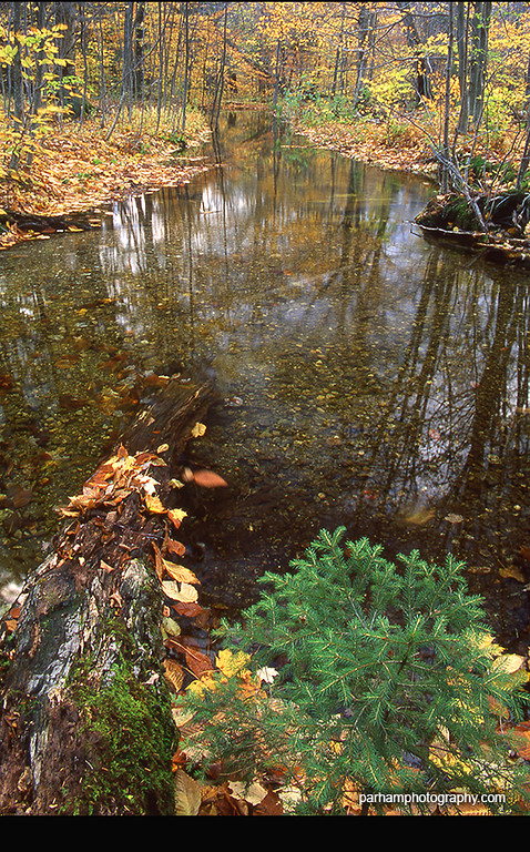Along the Appalachian Trail near Bennington, Vermont (NE-0310)