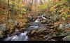Appalachian Woodlands, New Hampshire  (NE-0305)