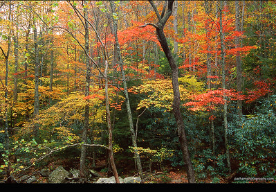 Great Smoky Mountains - Autumn Colors  (AP-0325)