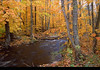 Woodland Stream in New Hampshire-Autumn  (NE-0362)