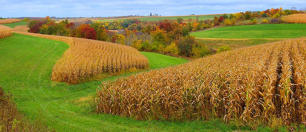Wisconsin Autumn Fields - Panorama