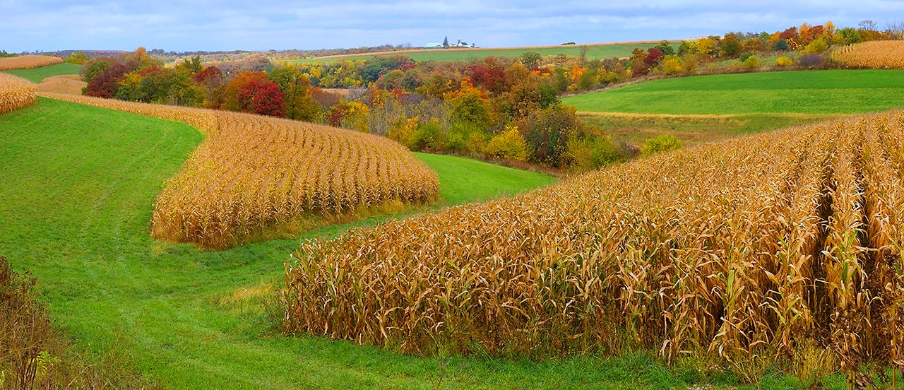 Wisconsin Cornfield Panorama