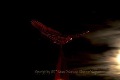 yarrow hawk_0033