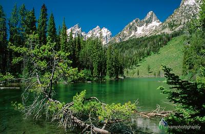 String Lake - Summer  (C003)