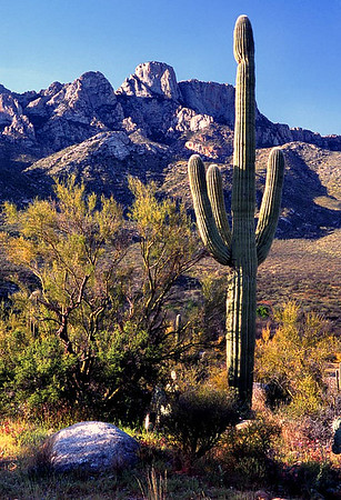 (AZ-0520)  Santa Catalina Mountains and Saguaro