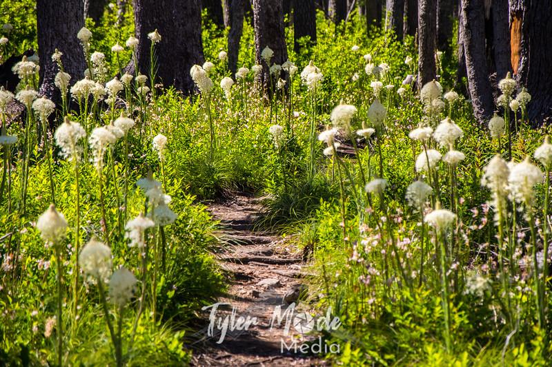 134  G Bear Grass Trail