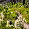 50  G Bear Grass and Trail