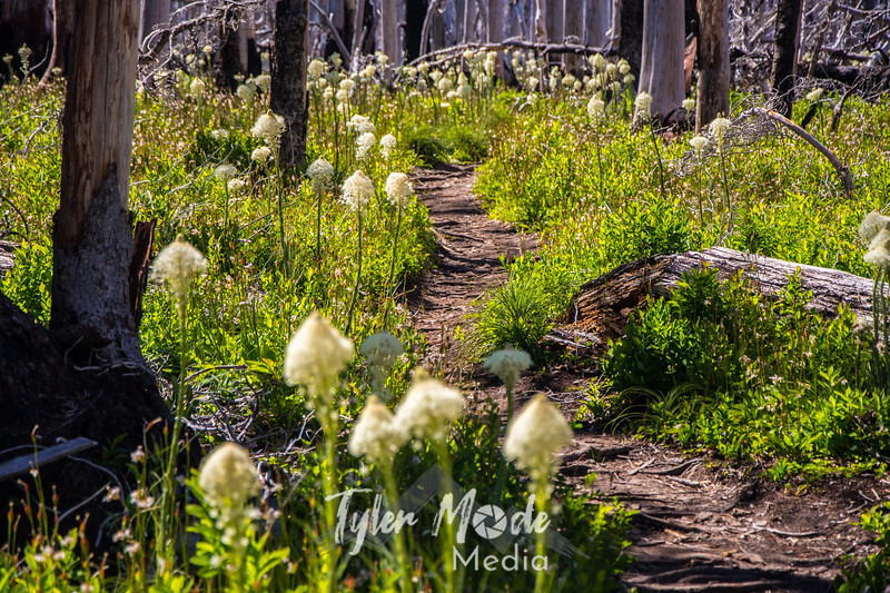 141  G Bear Grass Trail